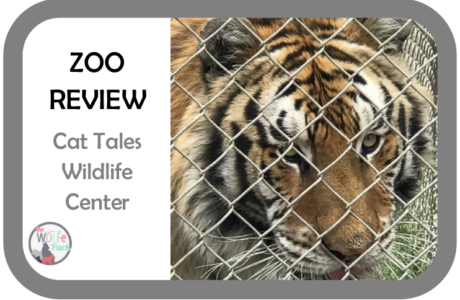 ZOO REVIEW 1-                              Cat Tales Wildlife Center