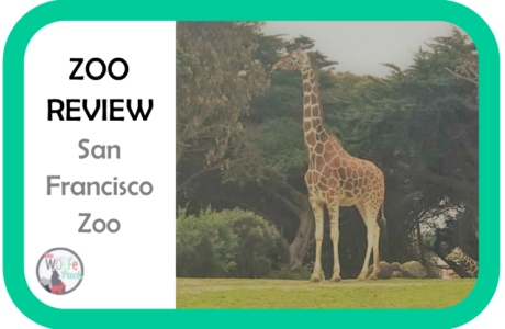 ZOO REVIEW 3- San Francisco Zoo